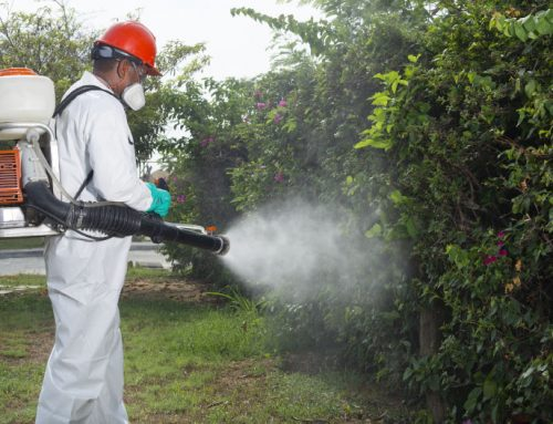 Fumigación en Cartagena
